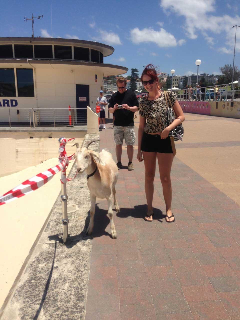 Me standing next to Gary the Goat on Bondi Beach, Sydney