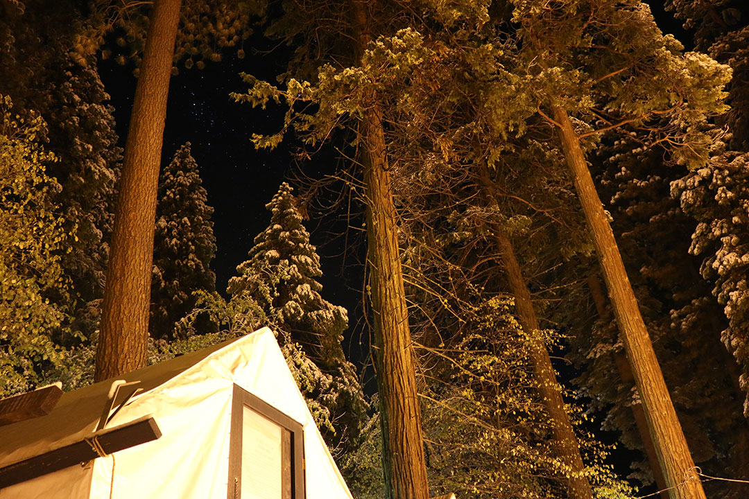 My tent-cabin for the night in the foreground, surrounded by giant sequoia trees with their golden leaves lit up and a starry sky in the background