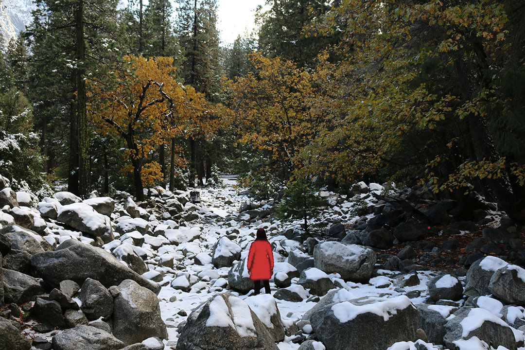 Me wearing a red jacket standing in a dried up river of stones and rocks covered in snow with green and orange trees lining the sides during Winter in Yosemite National Park