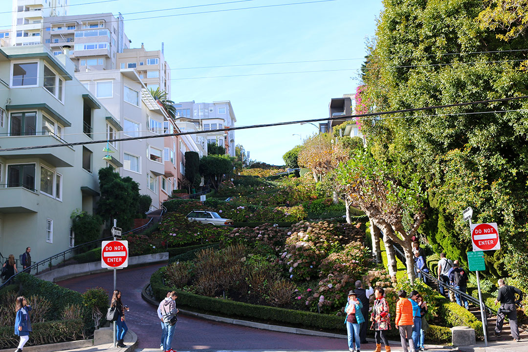 View from the bottom of crooked Lombard Street in San Francisco with coloured houses and lots of greenery