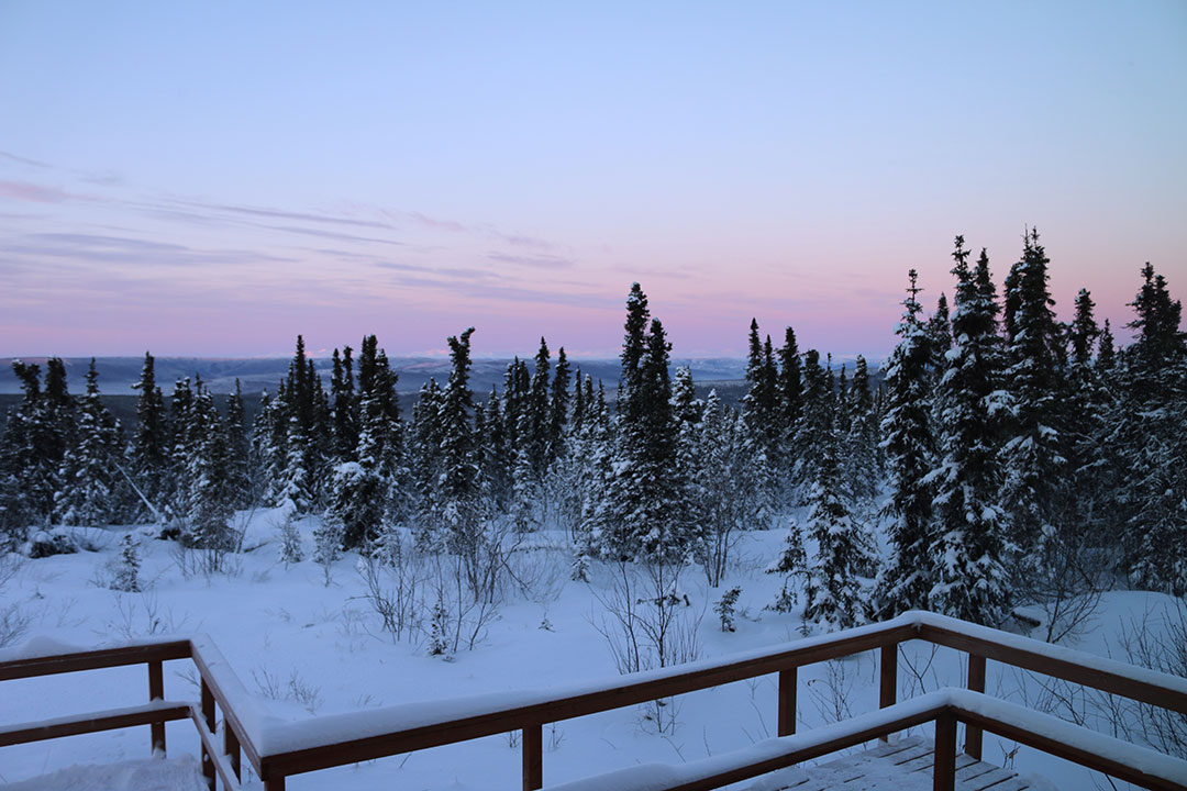 The beautiful pink winter view of snow-covered trees at sunset north of Fairbanks Alaska while waiting for the aurora borealis northern lights