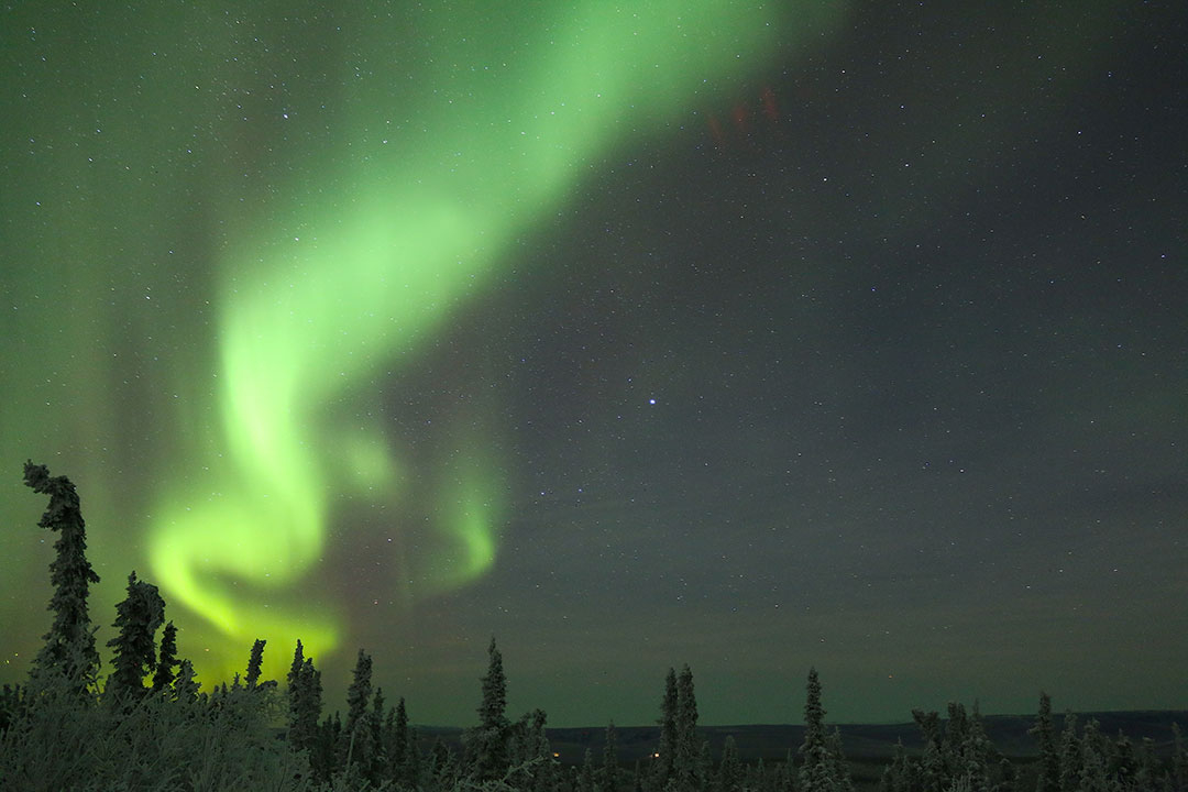 Bright green aurora borealis northern lights dancing in the sky above trees and snow in Fairbanks Alaska
