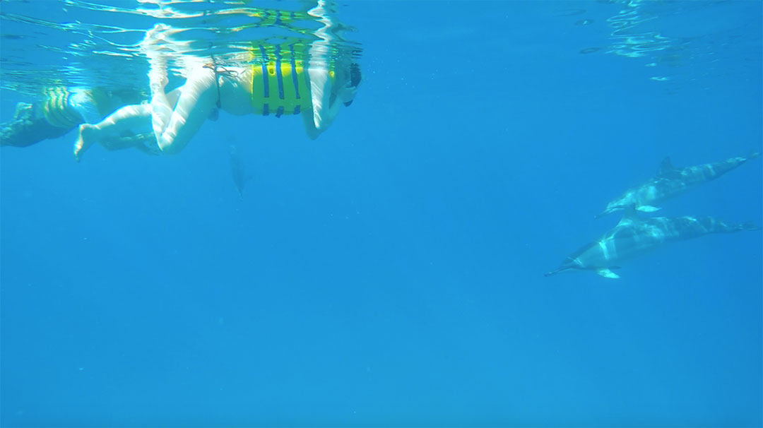 Friends snorkelling right next to wild dolphins in the ocean in Hawaii