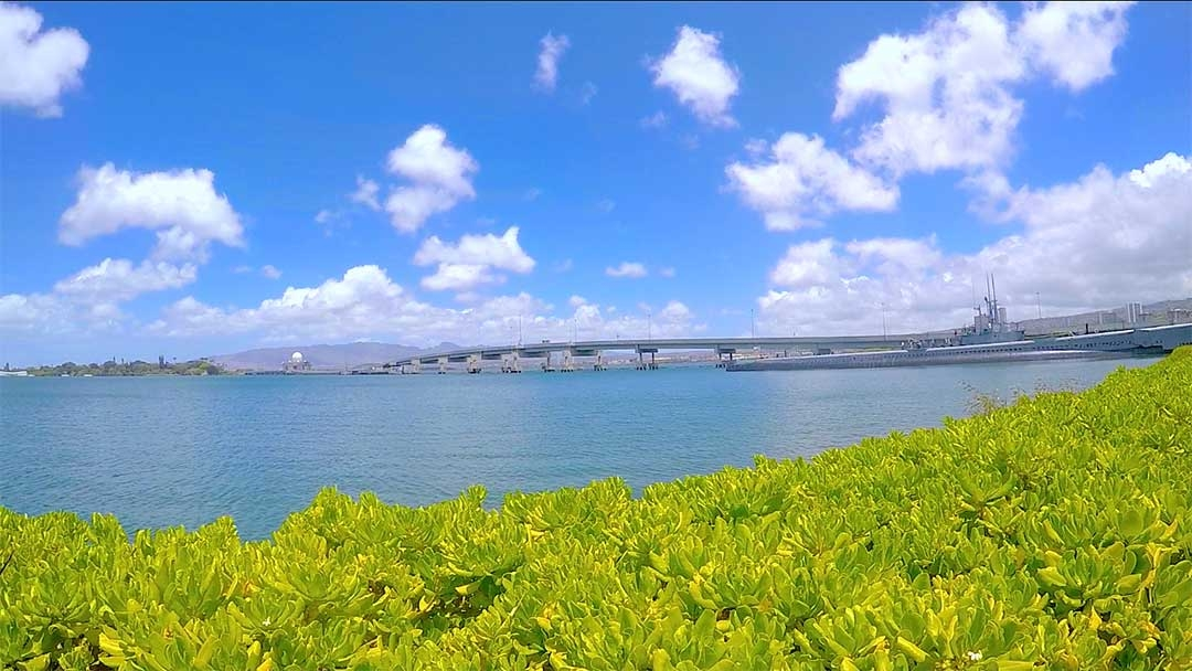 Looking out over the yellow green bushes to the sparkling water of Pearl Harbour with a beautiful blue sky and white fluffy clouds in Hawaii