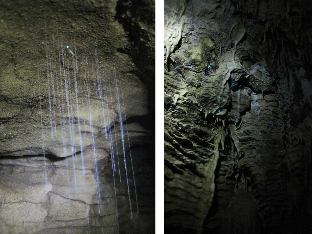 Two photos of beautiful glow worms hanging from the ceiling of the wet cave