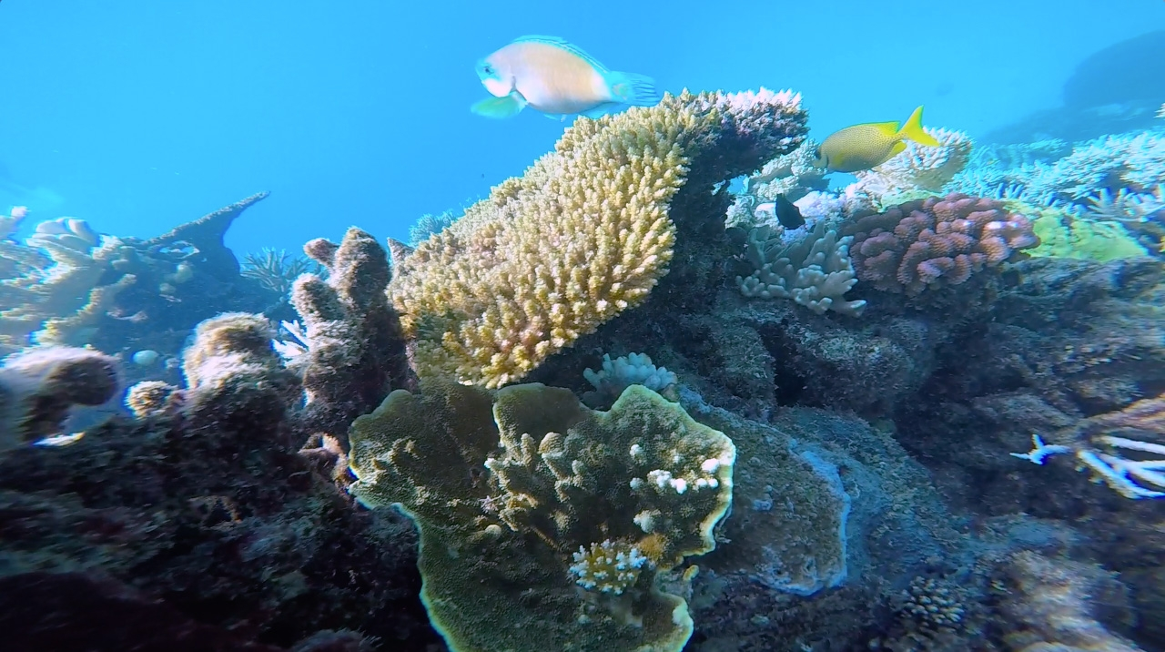 Multicoloured fish swim amongst coral in the Great Barrier Reef