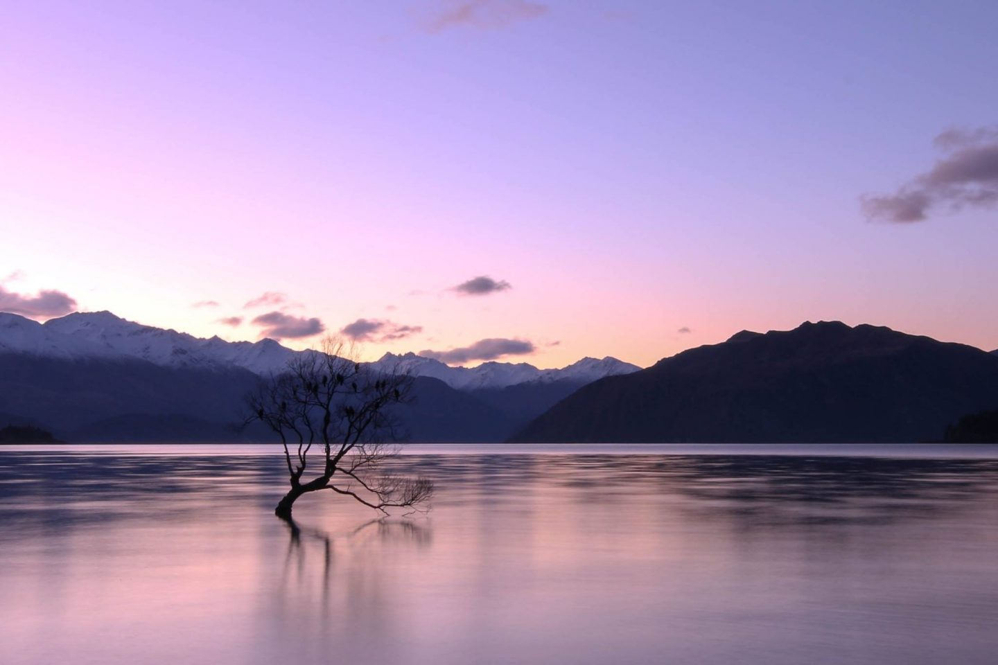 That Wanaka Tree - New Zealand